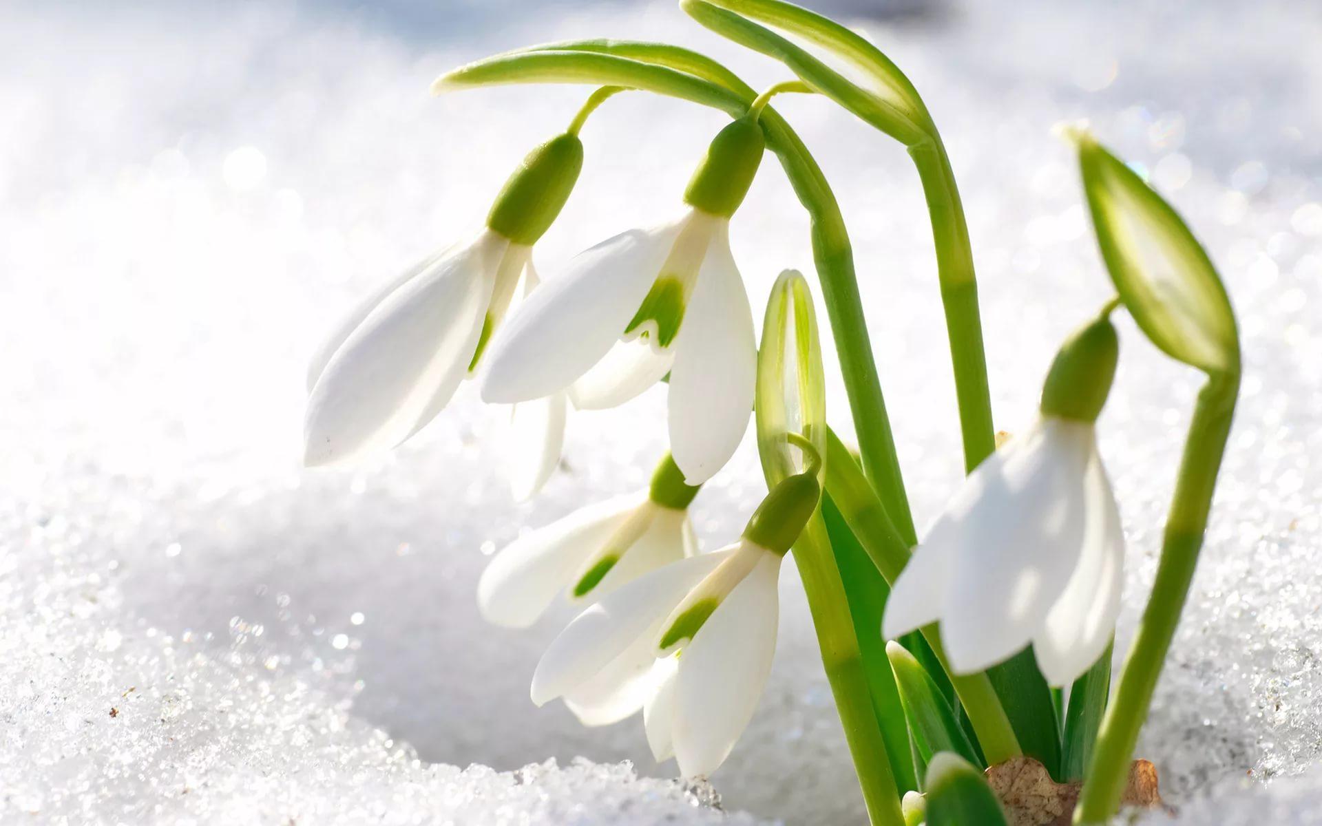 Весенний сезон для обустройства бани и сауны